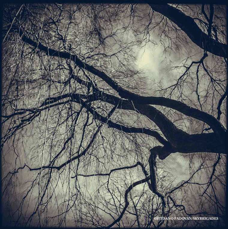 TreeKiss
