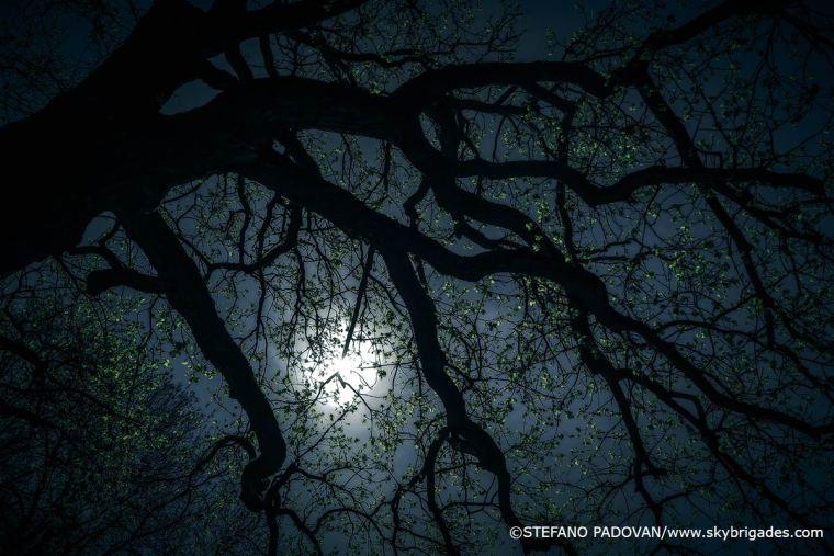 nightfingers
