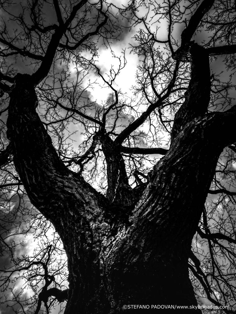 HMtree